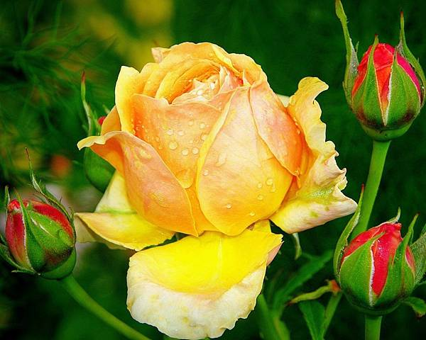 花朵 (04)