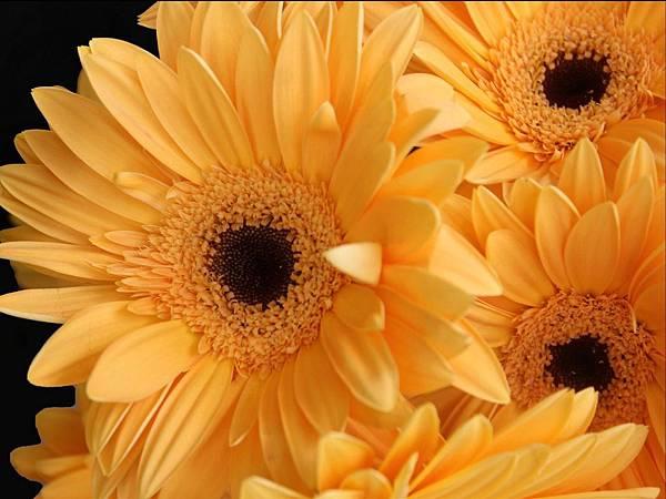 花朵 (03)