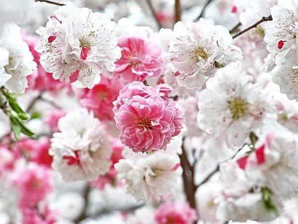 花朵 (05)