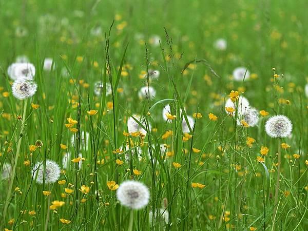 花朵 (06)