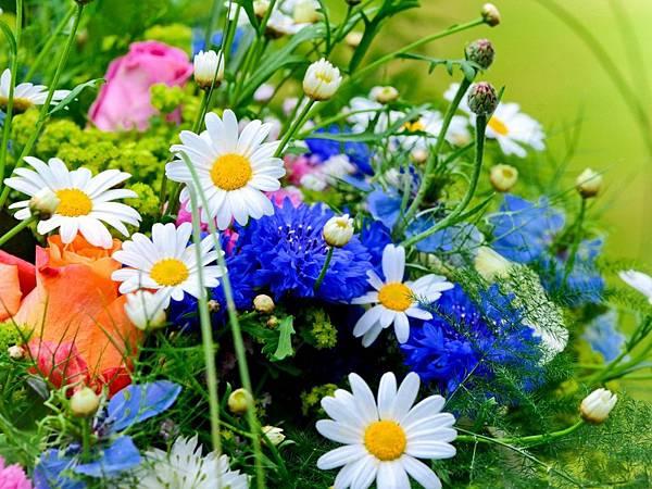 花朵 (08)
