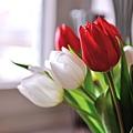 花朵 (09)