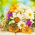 花朵 (11)