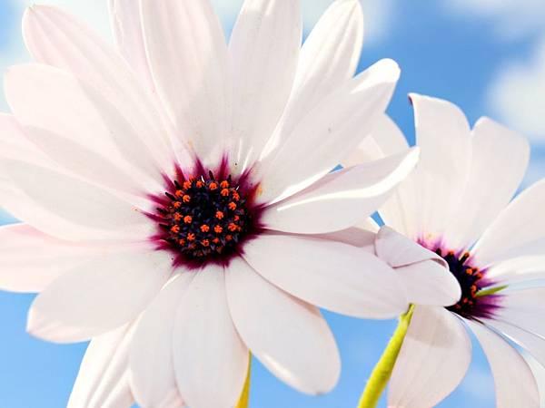 花朵 (15)