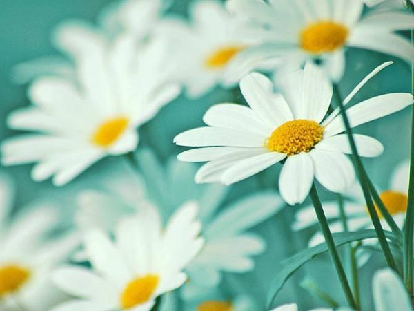 花朵 (17)