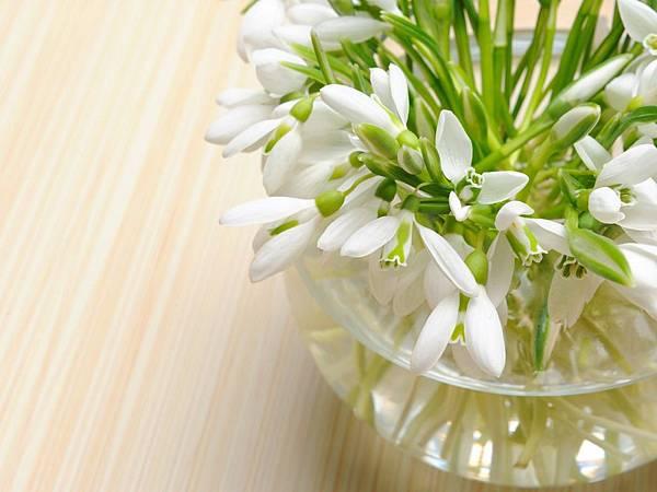 花朵 (20)
