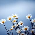 花朵 (18)