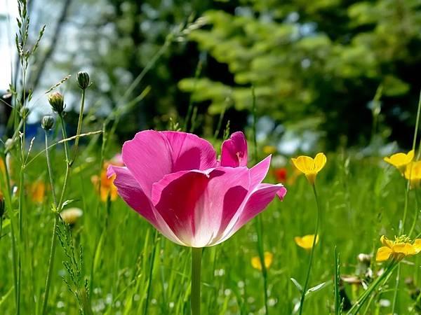花朵 (21)