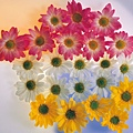 花朵 (24)