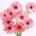 花朵 (27)