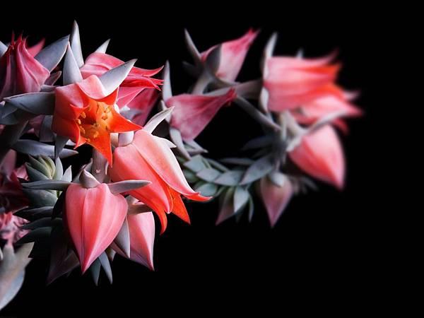 花朵 (30)