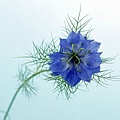 花朵 (32)