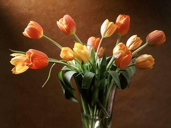花朵 (34)