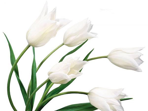 花朵 (36)