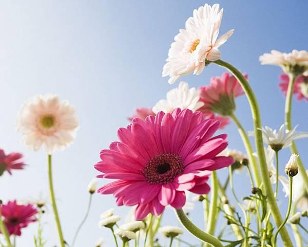 花朵 (37)