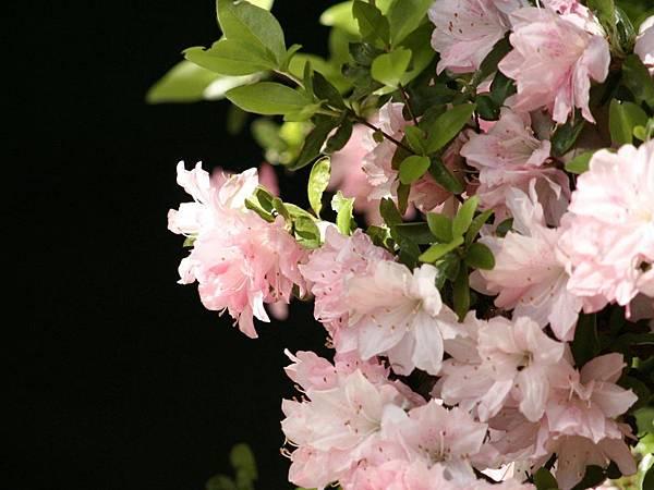 花朵 (35)