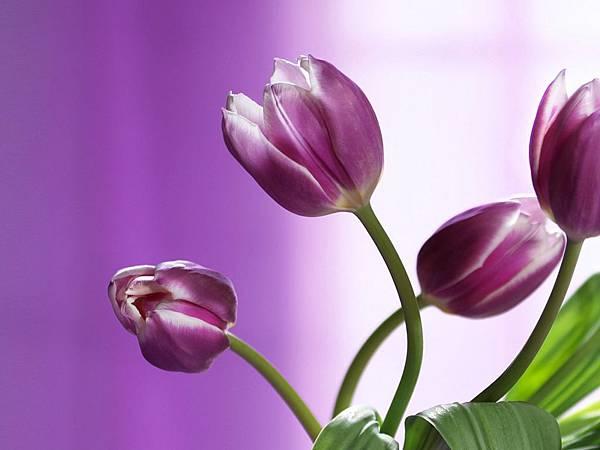 花朵 (38)