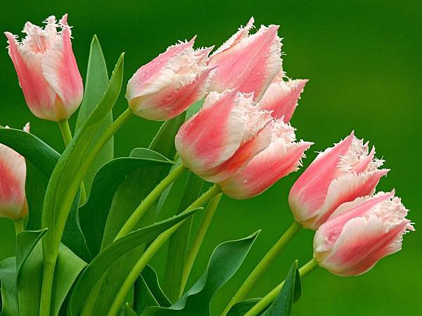 花朵 (39)