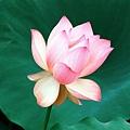 花朵 (42)