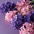 花朵 (40)