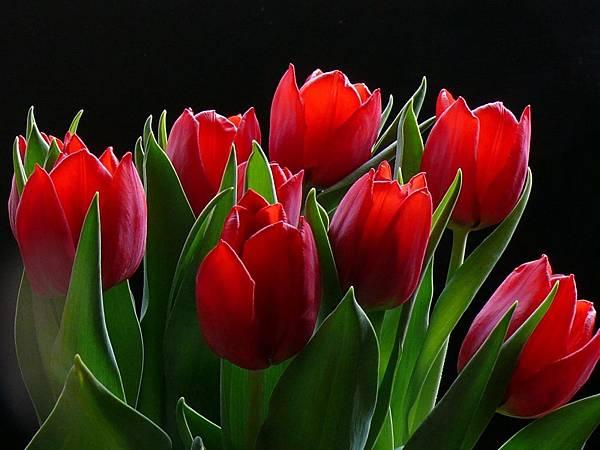花朵 (41)