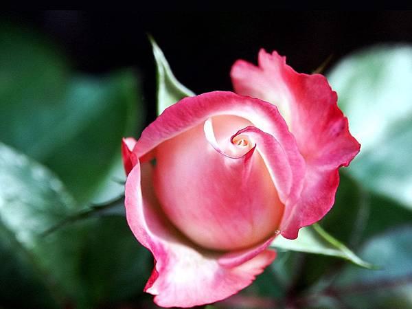 花朵 (44)