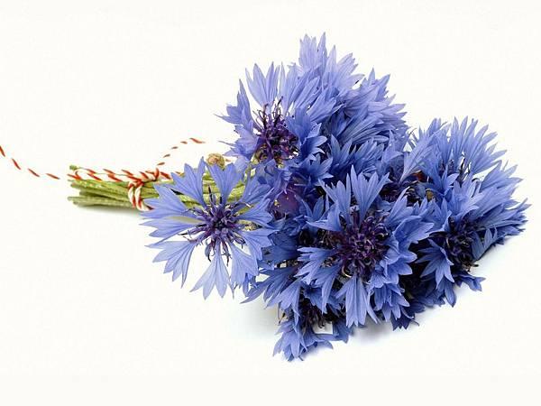 花朵 (45)