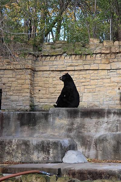 Henry Vilas Park Zoo_03 思考中的大棕熊.JPG