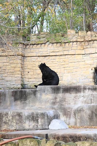 Henry Vilas Park Zoo_04仰天長望的大棕熊.JPG