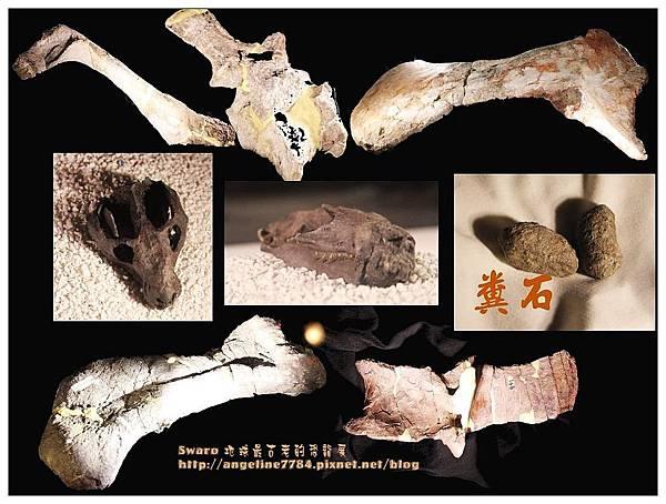 2. 化石們_nEO_IMG