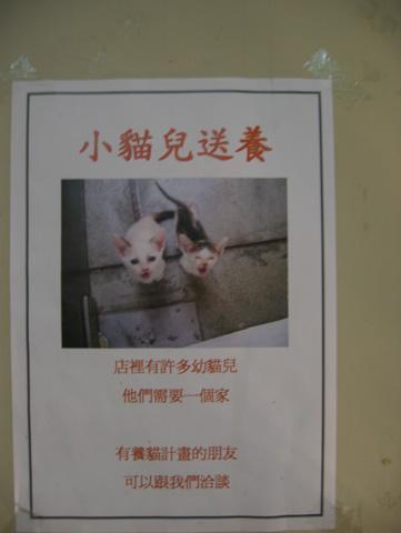 有愛心的人想飼養小貓咪的可以過來唷!