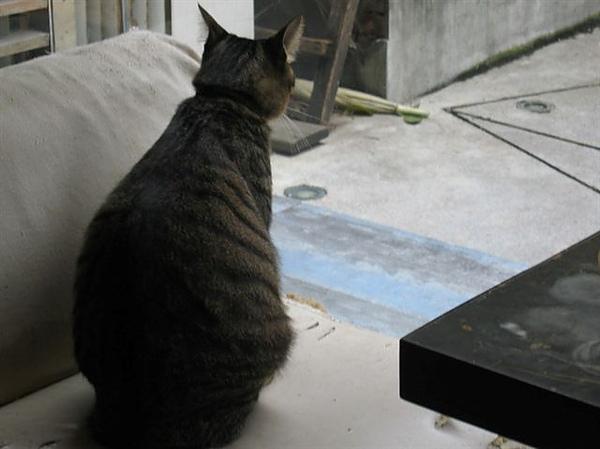 總覺得貓咪這樣的背影好可愛