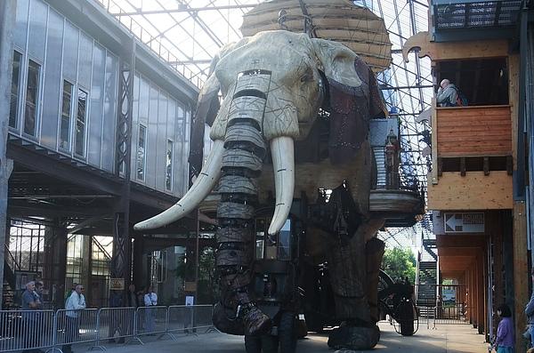 22大象動了動了.JPG