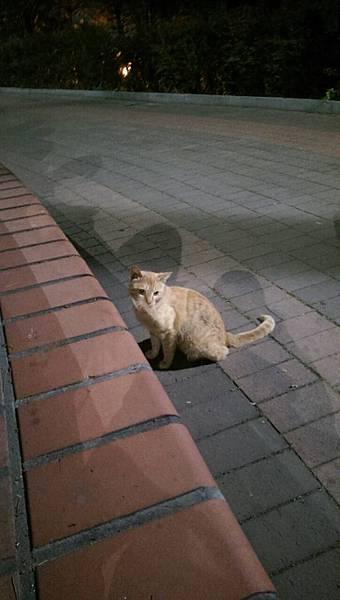駱山公園小野貓