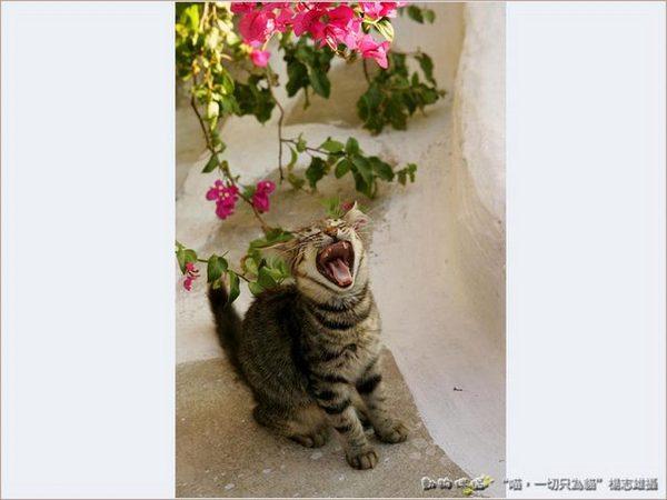 Cats in Greece 希臘貓