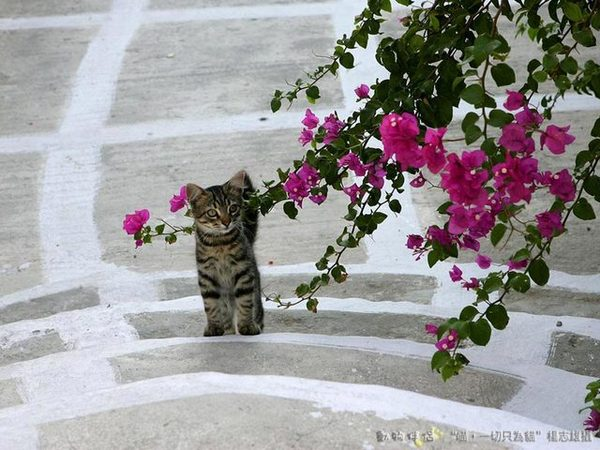 Cats in Greece 希臘貓