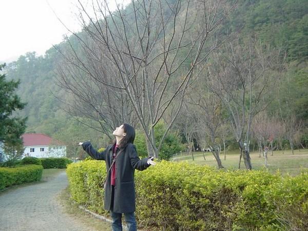 幻想春天櫻花飄下來