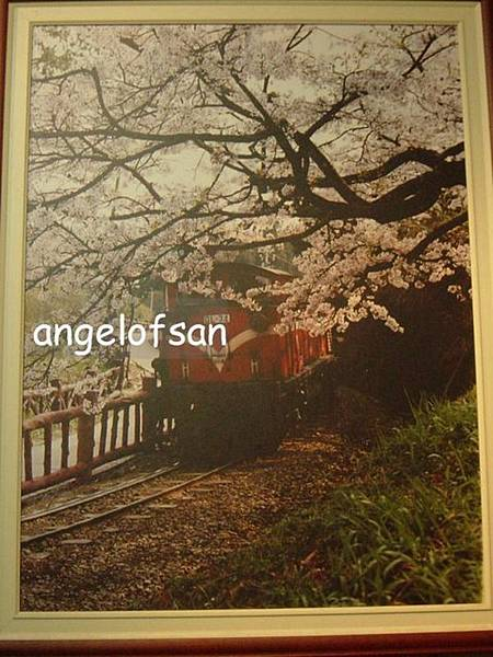 櫻花樹下的阿里山火車