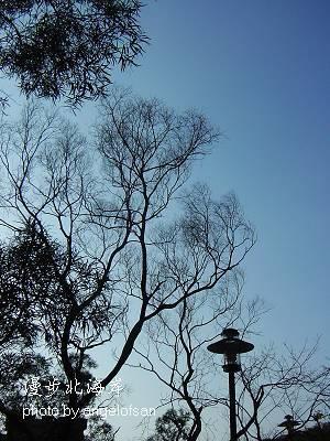 我愛拍-樹木&天空