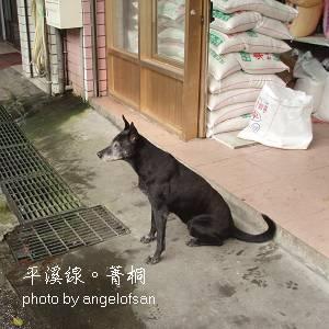 米店前的老黑狗