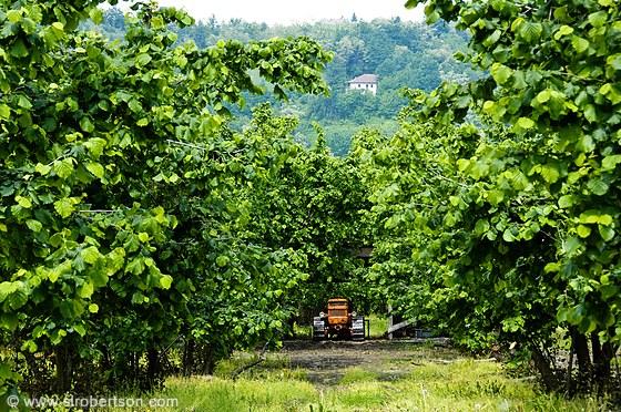 hazelnut-farm-tractor-3-b