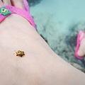 就是牠,可愛的瓢蟲??黃色的耶!