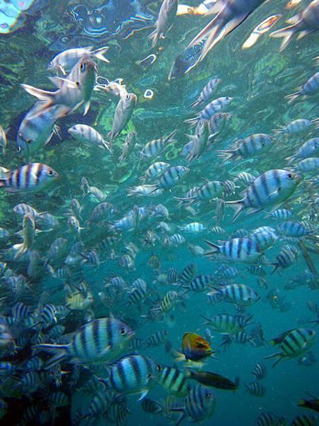 這一群魚魚中混著一隻顏色超鮮豔的魚~超可愛低