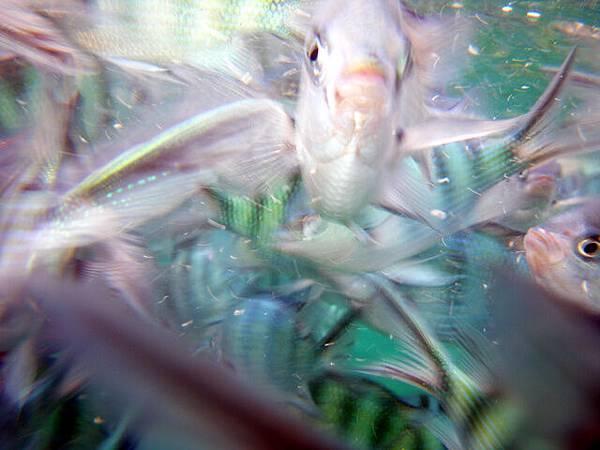 這魚撲上來搶鏡頭