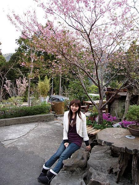 飯店前的櫻花樹~漂亮~