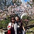 阿里山賓館前的漂亮櫻花~