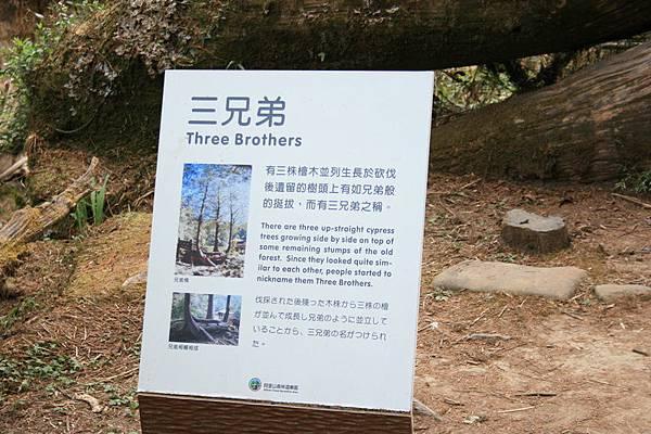 上ㄧ張比寶後面的樹就是三兄弟~