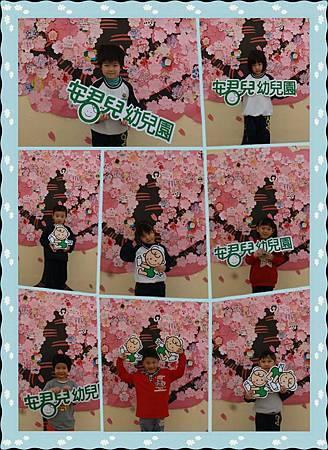 櫻花樹 獨照1