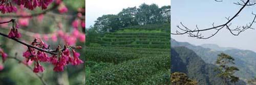 三峽--台灣農林熊空休閒農場1.jpg