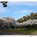熊本城19.jpg